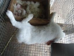 Un lapin mort de VHD