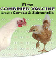 Vaccin contre Coryza et salmonellose