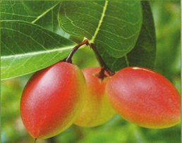 goji_fruit